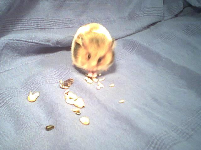 {short description of image}